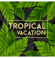 Tropical vacation card with banana palm leaves vector image vector image