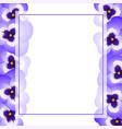 violet pansy flower banner card border vector image vector image