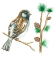 The sparrow on white background vector image