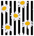 daisy flowers seamless pattern vector image vector image