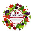berries isolated emblem cherry and currant vector image