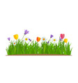 grass and flowers border greeting card decoration vector image vector image