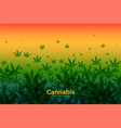 cannabis leaves background with warm gradient vector image vector image