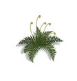 plant in isometric style cartoon tropical fern vector image vector image