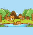 scene with many tigers in forest vector image