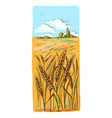 watercolor field of wheat barley or rye vector image vector image