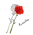 with carnation flower vector image