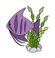 cute ornamental fish with seaweed vector image vector image