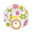 different human cell types vector image vector image