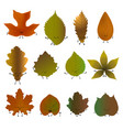 fallen leaves emoji set vector image vector image