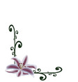 lily flower on ornament background vector image