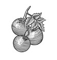 tomato sketch engraving vector image