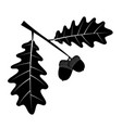 oak acorns with leaves black outline silhouette vector image