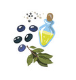 olives with olive branch and olive oil isolated on vector image