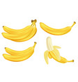 realistic set bananas isolated on white vector image vector image
