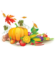Still life of autumn harvest vector image vector image