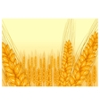 wheat harvest icon vector image vector image