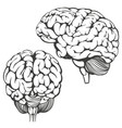 brains collection human anatomy icon cartoon vector image