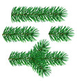 fir tree christmas branches vector image vector image