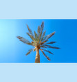 palm tree on blue sky background bottom view vector image