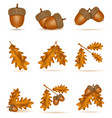 set icons autumn oak acorns with leaves vector image