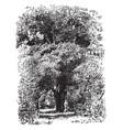 avocado tree vintage vector image vector image