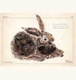 hare rabbit isolated hare rabbit vector image vector image