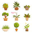 house plants decorative flowers indoors vector image vector image