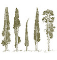 set of hand drawn trees italian cypress and pine vector image