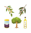 set olives fruit olive oil bottle tree branch vector image vector image