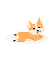 corgi puppy isolated playful purebred red corgi vector image vector image
