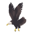 Bald eagle isolated on white background vector image