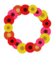 frame wreath of gerbera flowers vector image