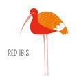 red ibis eudocimus ruber shorebird type scarlet vector image vector image