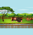 scene with chimpanzee in park vector image vector image