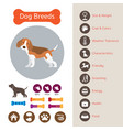 dog breeds infographic vector image vector image