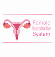 female human reproductive system ovary vagina vector image vector image