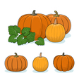 Pumpkin Vegetable Edible Fruit vector image vector image