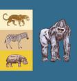african animals hippopotamus leopard wild zebra vector image