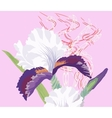 Iris on a Pink Background vector image vector image