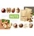 realistic healthy nuts composition vector image