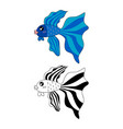 siamese fighting fish vector image vector image