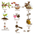 coffee processing step by step vector image vector image