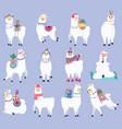 cute llama mexican fluffy alpaca peru wildlife vector image vector image
