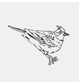 Hand-drawn pencil graphics lark oriole chickadee vector image vector image