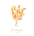 oat branches set vector image vector image
