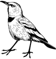 Pander Ground Jay vector image vector image