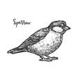 vintage sketch true or american sparrow vector image vector image