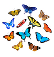 Collection of butterflies vector image