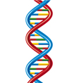 DNA-deoxyribonucleic acid vector image
